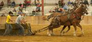 HorsePull-7756
