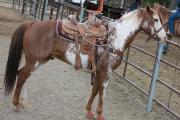 Championsp saddle-3060.jpg
