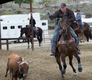 Horse one leg-3004.jpg
