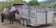 horse & trailer-3602.jpg