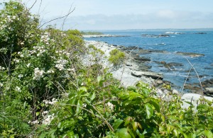 Newport, R.I.:  Sachuest National Wildlife Reserve 6/8/12