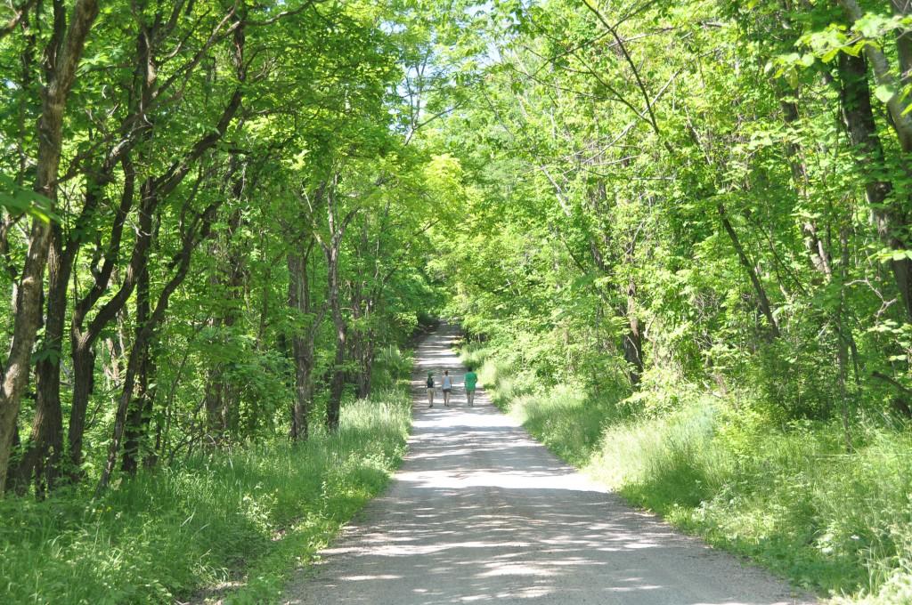 Warnock, Ohio: Appalachian Spring, Dysart Woods 5/29/10